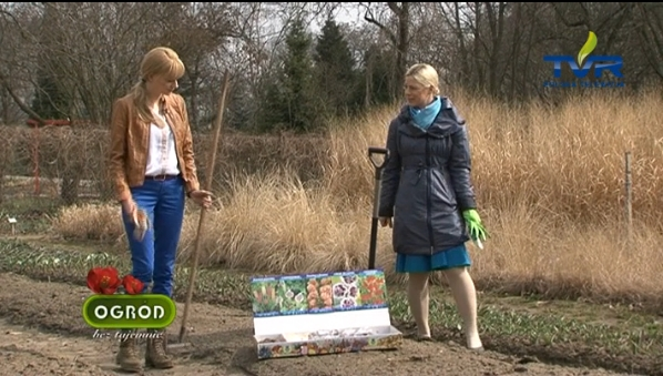 TVR - rośliny cebulowe firmy KRÓLIK